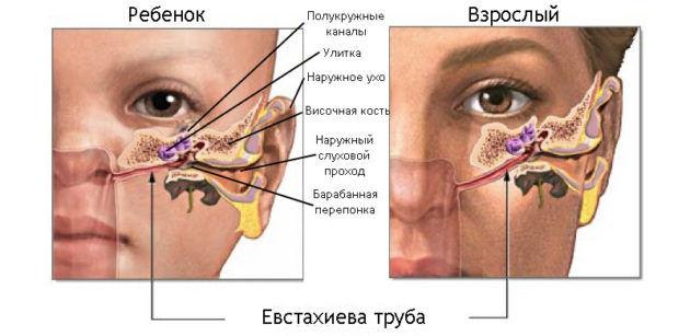 Евстахиевая труба