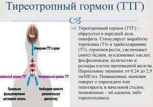 тиреотропный гормон повышен что это значит