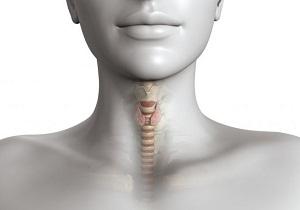 размер щитовидной железы норма у женщин таблица