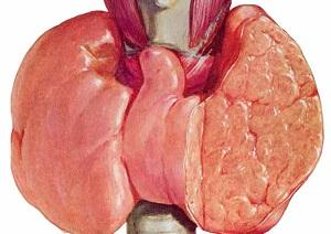 першение в горле при заболевании щитовидной железы