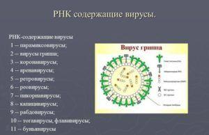 РНК-содержащий вирус