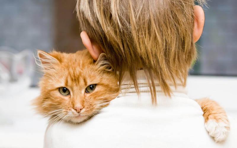 Как промыть желудок кошке Показания и порядок действий