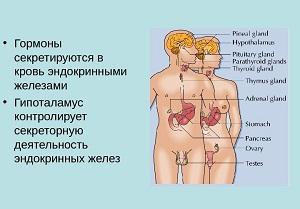 эндокринные железы поджелудочная железа