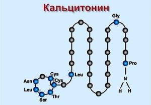 Кальцитонин (гормон щитовидной железы): норма, понижен, повышен, анализ у женщин