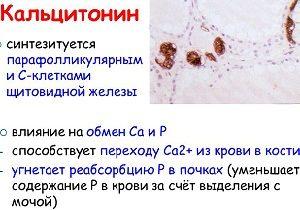 Кальцитонин: норма гормона, анализ крови у женщин