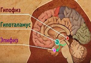 гормоны эпифиза
