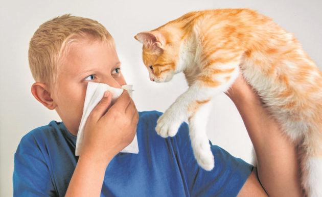 Аллергия на шерсть у ребенка
