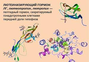 Лютеинизирующий гормон у женщин норма по возрасту и причины повышения