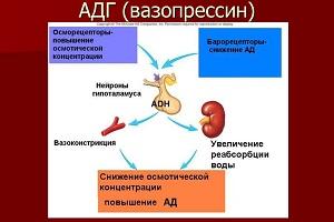 несахарный диабет клинические рекомендации