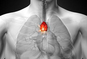 гормоны вилочковой железы