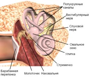 Органы которые при воспалении могут спровоцировать шум в ушах