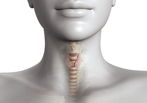 хронический тиреоидит хашимото