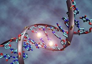 АМГ гормон - что это такое, анализ и показатели нормы в таблице