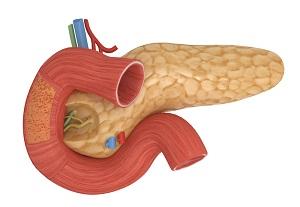 поджелудочная железа эндокринная часть