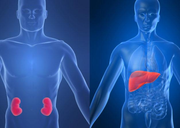 Хронические патологии печени и почек