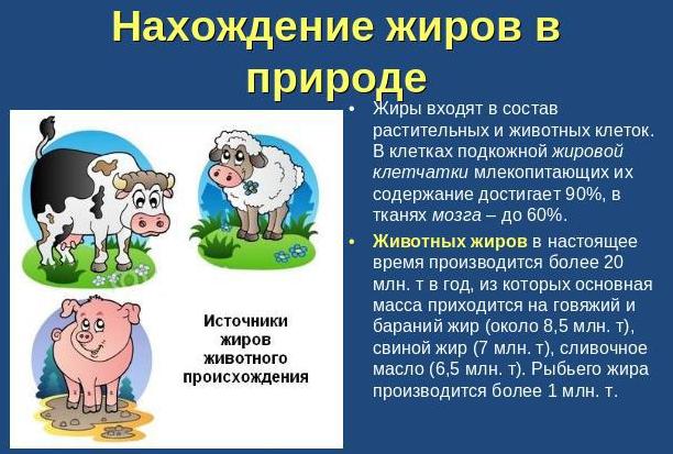 Польза животных жиров