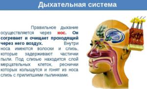 Правильное дыхание осуществляется через нос